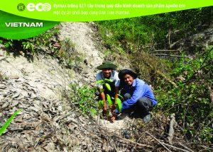 Rymax trồng 617 cây trong quý đầu kinh doanh sản phẩm Apollo Eco – Một dự án phối hợp cùng One Tree Planted.